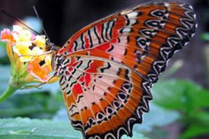 Αισθητήρες θερμότητας διαθέτουν τα φτερά της πεταλούδας